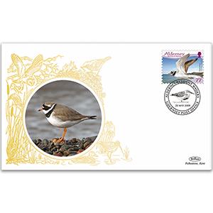 2009 Alderney - Ringed Plover