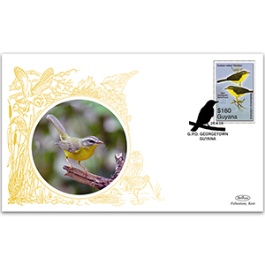 2010 Guyana - Golden-Tailed Warbler
