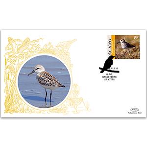 2010 St. Kitts Birds - Western Sandpiper