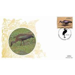 Tanzania Birds - Hadada Ibis