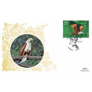 Palau Birds - Brahminy Kite