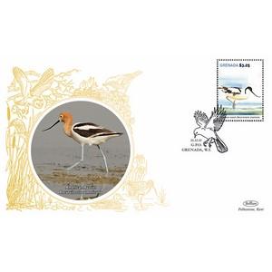 Grenada Birds - American Avocet