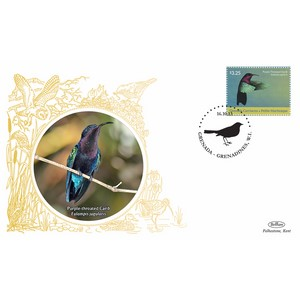 Grenada Birds - Purple Throated Carib