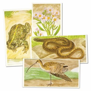 Journey Downstream (TW105) set of 25 cards