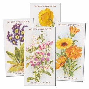 Old English Garden Flowers Reproduction Set of 50 cards