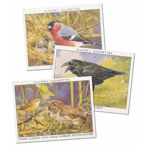 Wild Birds Reproduction Set of 25 cards