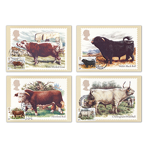 1984 British Cattle PHQ Cards - Set of 5