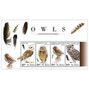 St.Kitts Owls 4v Shlt 2015 Barn Owl