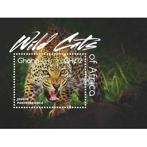 Ghana Wild Cats I 1v M/S (jaguar)