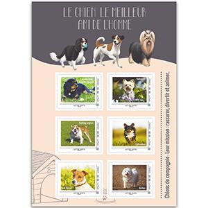 France Pet Dogs Shlt 27/2/16