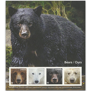 Canada Bears 4v Pane 24/7/19