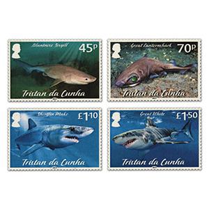 2021 Tristan Sharks Pt 2 4v