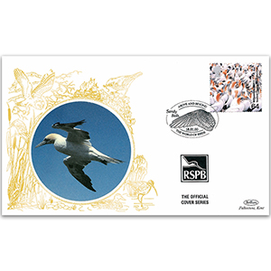 2000 GB - Gannet - Benham RSPB Official