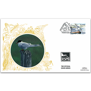 2000 Aland - Arctic Tern - Benham RSPB Official